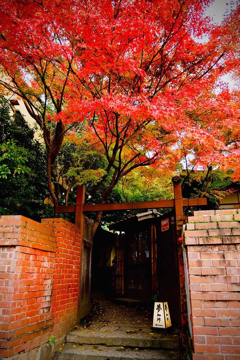 京都(伏見稻荷神社清水寺夜楓)_191129_0015